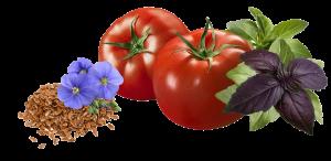 len_tomat_basilik